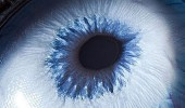 動物的眼睛