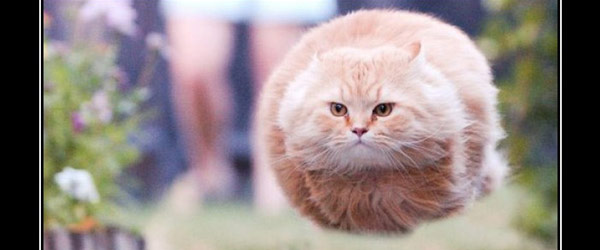 讓貓咪來帶你認識HTTP錯誤代碼