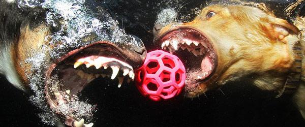 水中接球狗