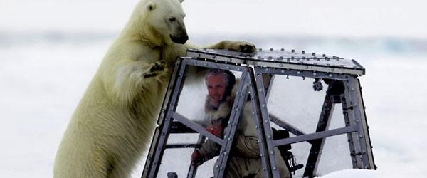 以肉身吸引北極熊的瘋狂攝影師