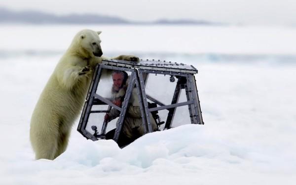 以肉身吸引北極熊的瘋狂攝影師1