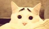 真的不是Photoshop!長了眉毛的憂鬱貓