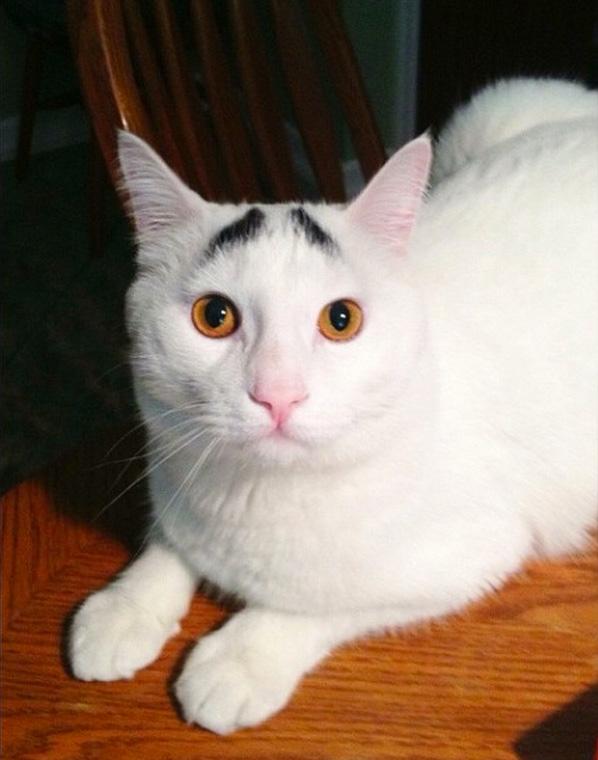 真的不是Photoshop!長了眉毛的憂鬱貓1