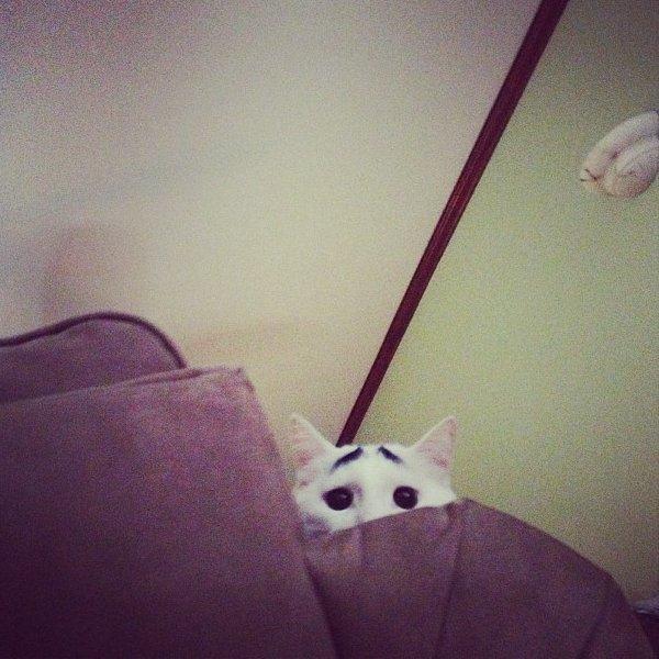真的不是Photoshop!長了眉毛的憂鬱貓10