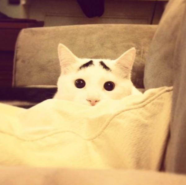 真的不是Photoshop!長了眉毛的憂鬱貓2