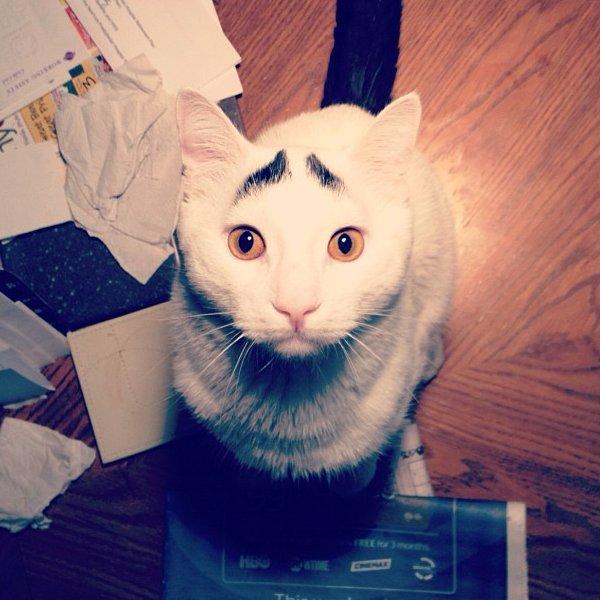 真的不是Photoshop!長了眉毛的憂鬱貓3