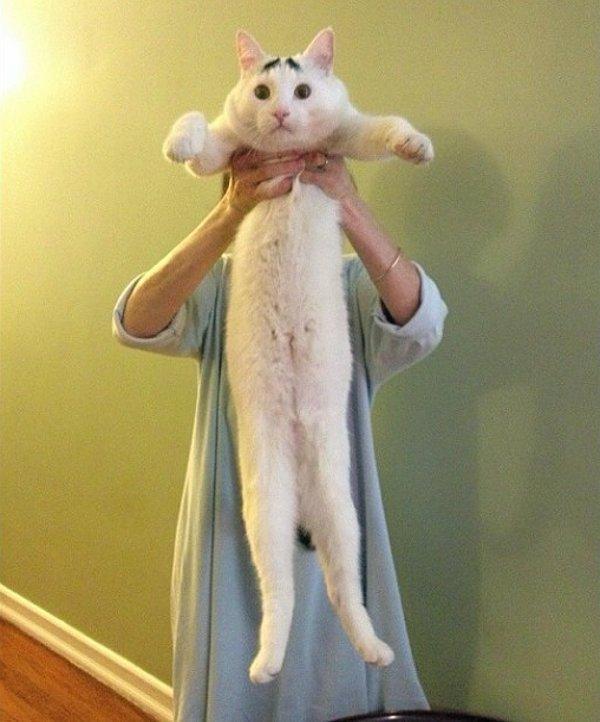 真的不是Photoshop!長了眉毛的憂鬱貓6