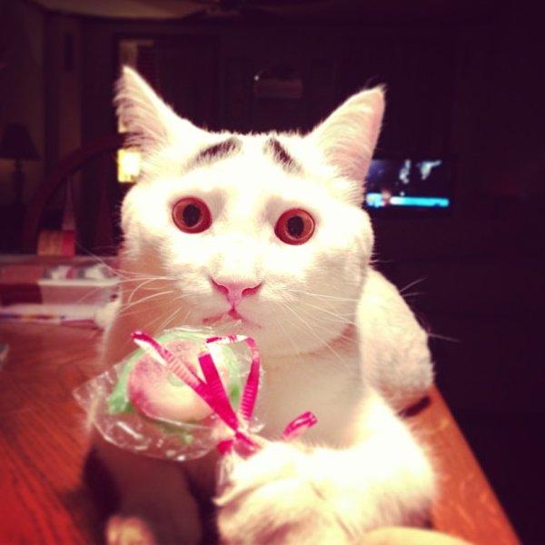 真的不是Photoshop!長了眉毛的憂鬱貓7