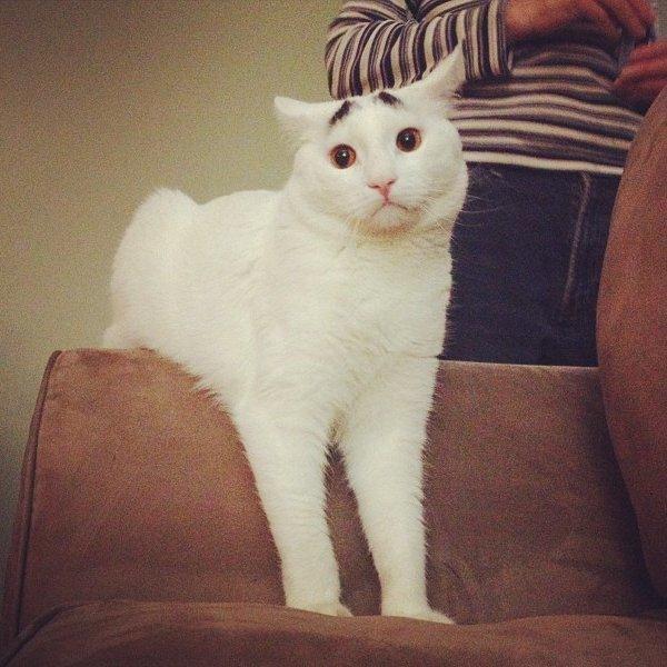 真的不是Photoshop!長了眉毛的憂鬱貓8
