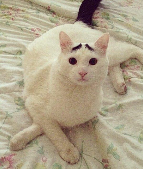 真的不是Photoshop!長了眉毛的憂鬱貓9