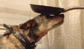 傑克,一隻平衡宇宙萬物的狗