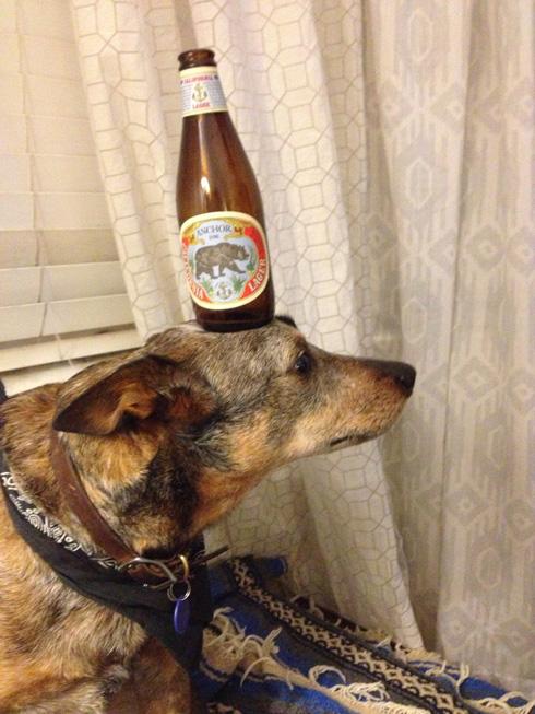 傑克,一隻平衡宇宙萬物的狗10
