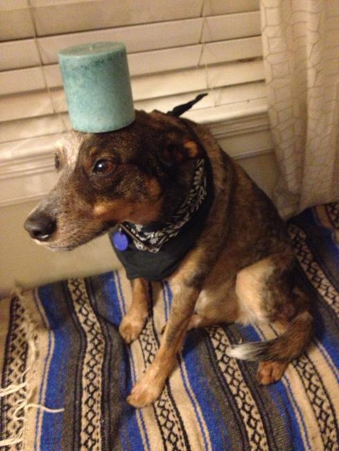 傑克,一隻平衡宇宙萬物的狗12