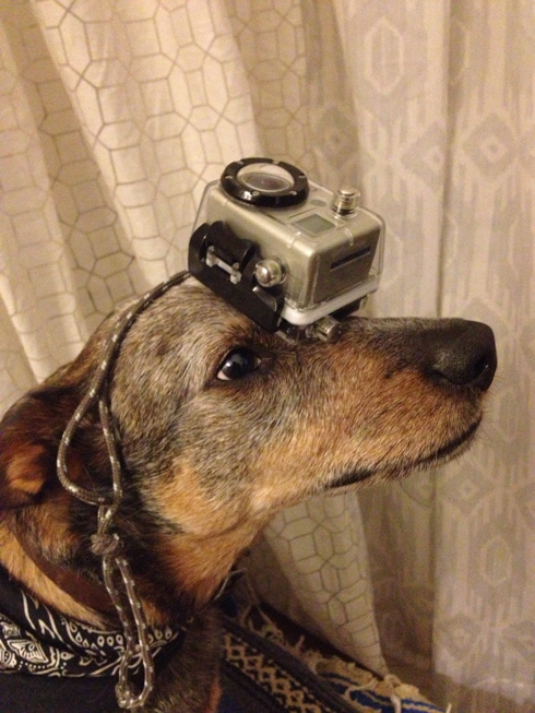 傑克,一隻平衡宇宙萬物的狗13