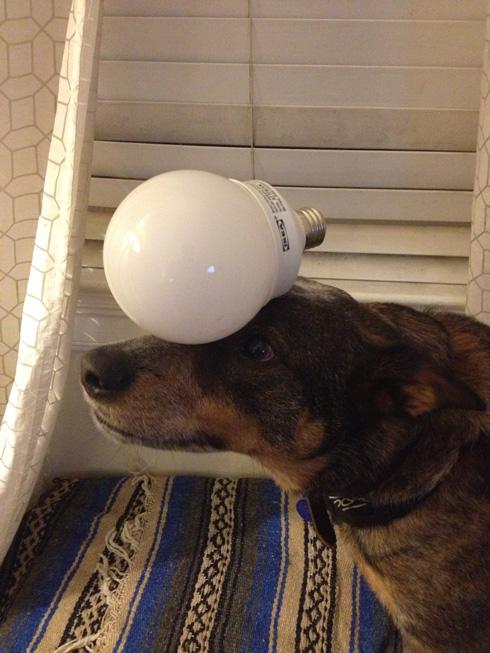 傑克,一隻平衡宇宙萬物的狗14