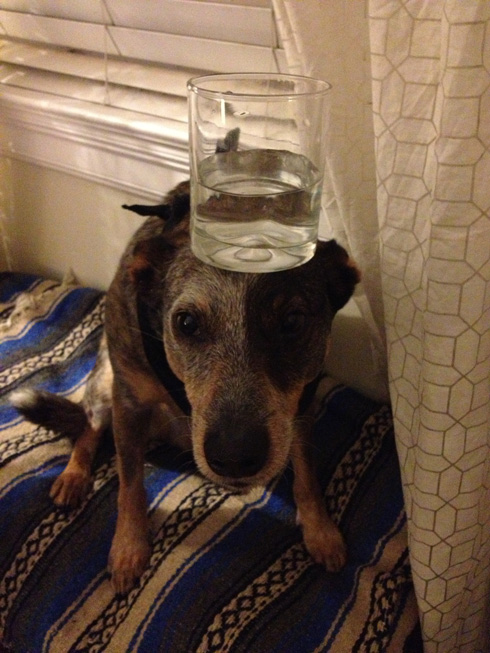 傑克,一隻平衡宇宙萬物的狗15