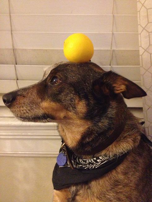 傑克,一隻平衡宇宙萬物的狗16