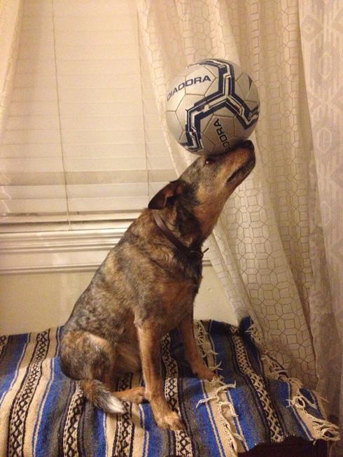 傑克,一隻平衡宇宙萬物的狗17