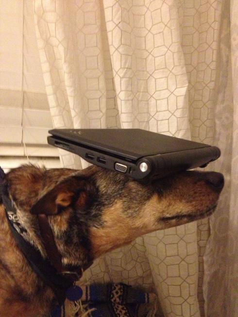 傑克,一隻平衡宇宙萬物的狗18