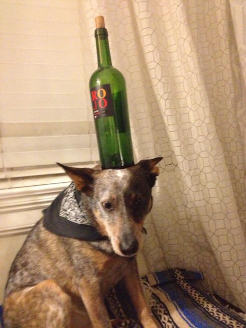 傑克,一隻平衡宇宙萬物的狗2