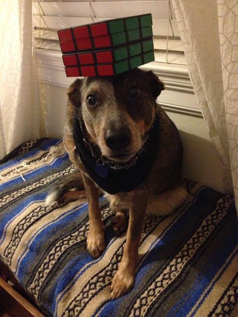 傑克,一隻平衡宇宙萬物的狗20