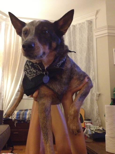 傑克,一隻平衡宇宙萬物的狗22
