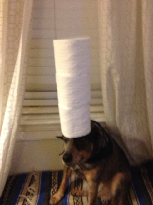傑克,一隻平衡宇宙萬物的狗3