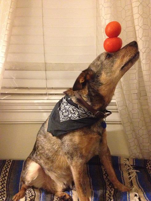 傑克,一隻平衡宇宙萬物的狗4