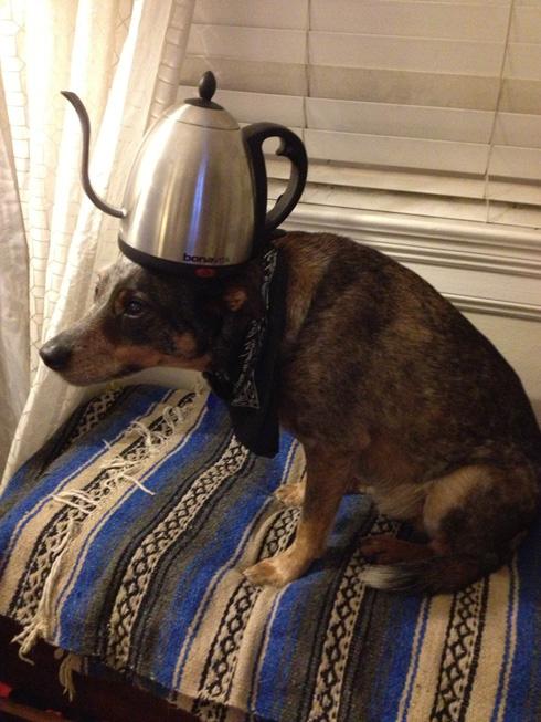 傑克,一隻平衡宇宙萬物的狗5