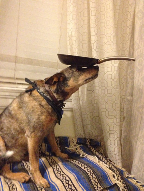 傑克,一隻平衡宇宙萬物的狗6
