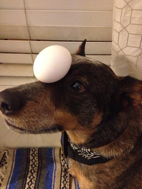 傑克,一隻平衡宇宙萬物的狗7
