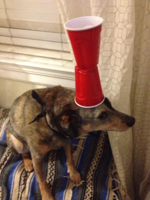 傑克,一隻平衡宇宙萬物的狗9