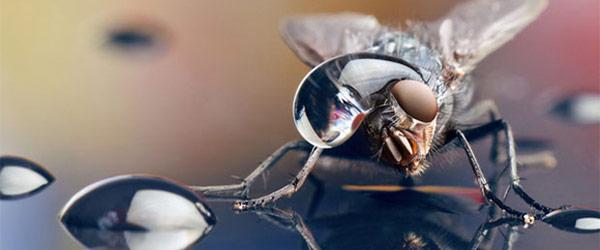 噢取!被水滴壓到頭小小昆蟲們