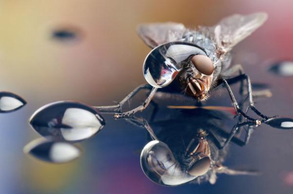 噢取!被水滴壓到頭小小昆蟲們1