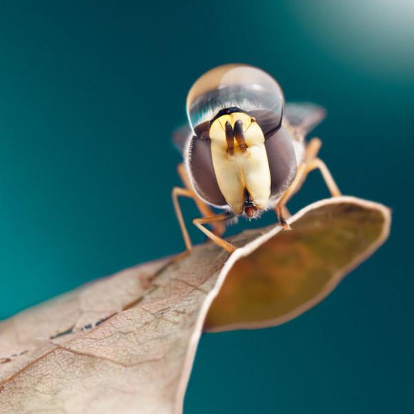 噢取!被水滴壓到頭小小昆蟲們2