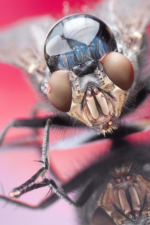 噢取!被水滴壓到頭小小昆蟲們3