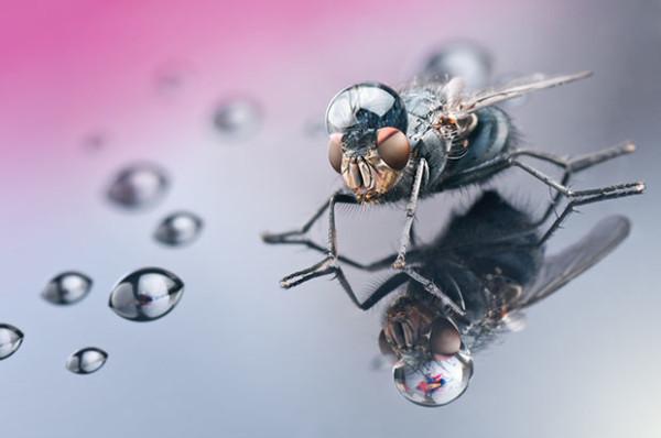 噢取!被水滴壓到頭小小昆蟲們4