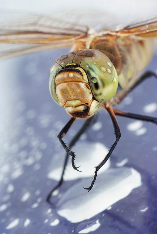 噢取!被水滴壓到頭小小昆蟲們6