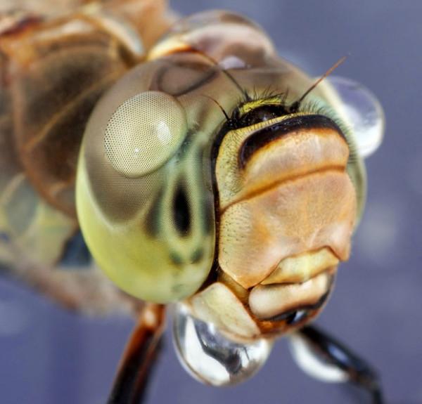 噢取!被水滴壓到頭小小昆蟲們7
