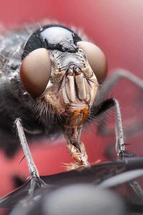 噢取!被水滴壓到頭小小昆蟲們8