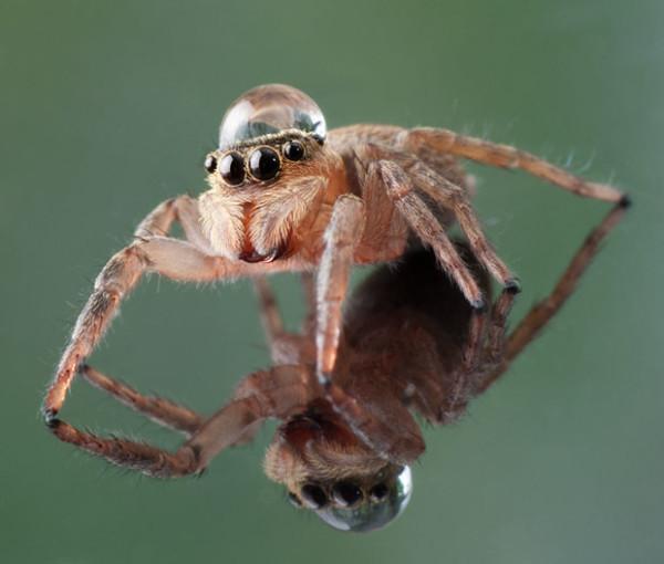 噢取!被水滴壓到頭小小昆蟲們9