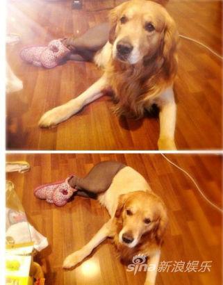 狗狗穿絲襪:這是最糟糕的狗狗惡作劇嗎?6