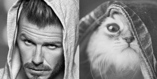 男人與貓做一樣的動作16