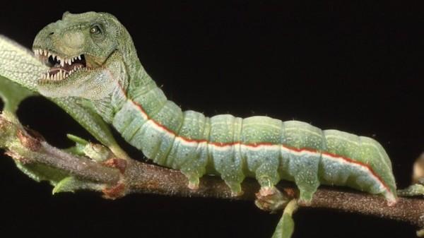 20種不能不存在的混血合體動物11