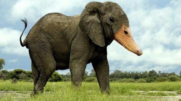 20種不能不存在的混血合體動物12