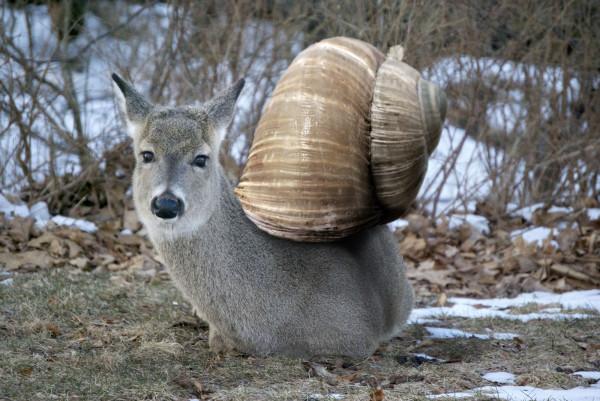 20種不能不存在的混血合體動物14