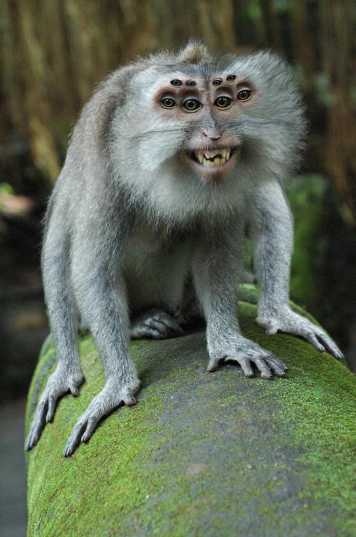 20種不能不存在的混血合體動物15