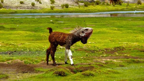 20種不能不存在的混血合體動物4