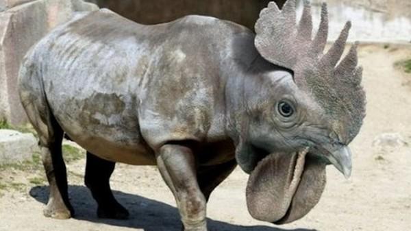 20種不能不存在的混血合體動物5