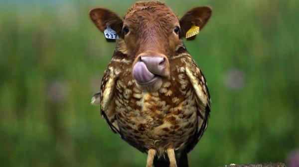 20種不能不存在的混血合體動物7
